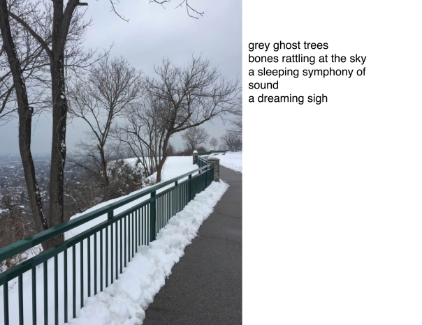 grey-ghost-trees